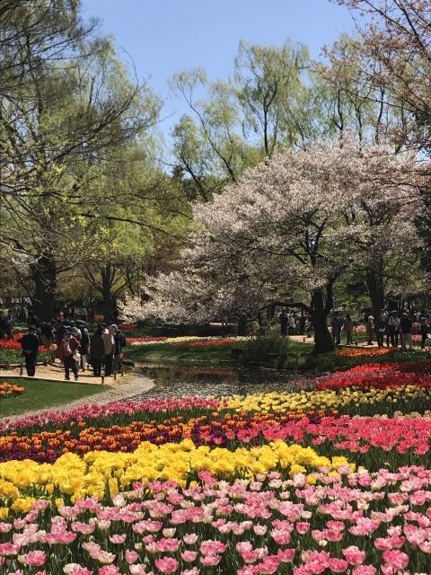 昭和記念公園のチューリップ_a0180279_10202361.jpg