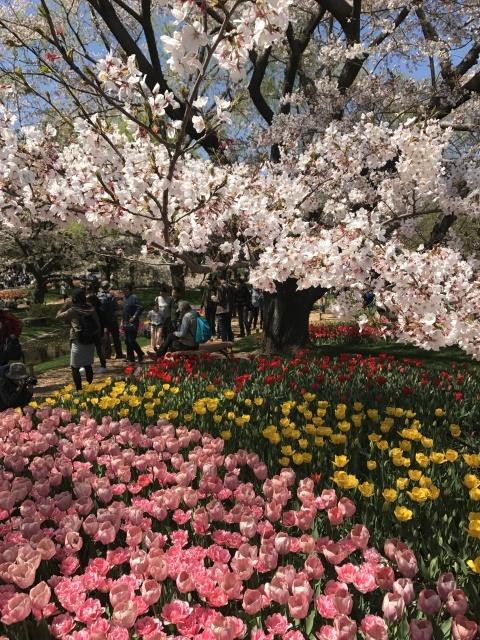 昭和記念公園のチューリップ_a0180279_10215183.jpg