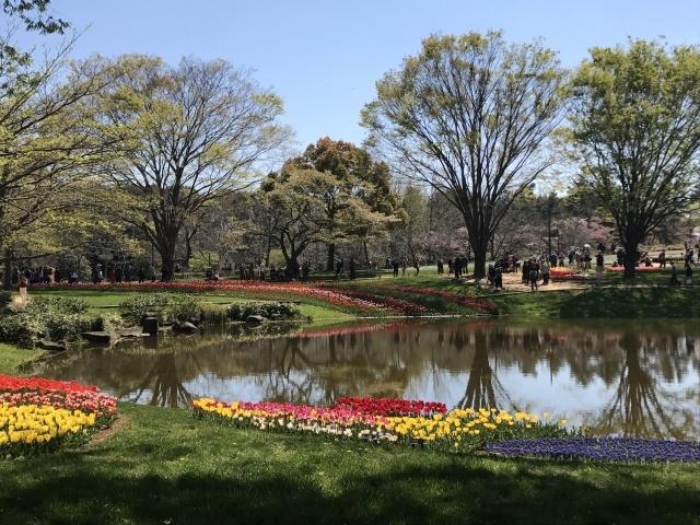 昭和記念公園のチューリップ_a0180279_10240821.jpg