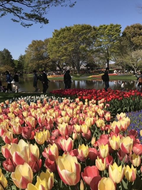 昭和記念公園のチューリップ_a0180279_10272681.jpg