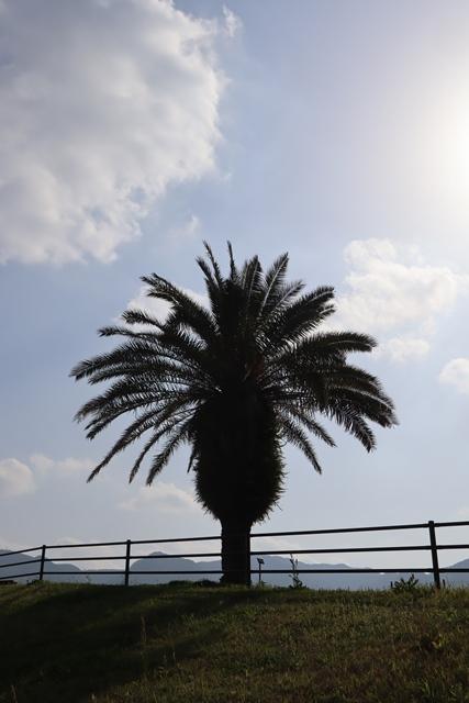 藤田八束の鉄道写真@新紙幣発行決定、いろんな意見に注目・・・沖縄軍事基地問題も、福島復興問題に関連しも国民はもっと考えたいものです_d0181492_22074123.jpg