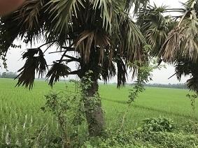 【ご案内】講演会「バングラデシュの今」_a0265401_10413019.jpg