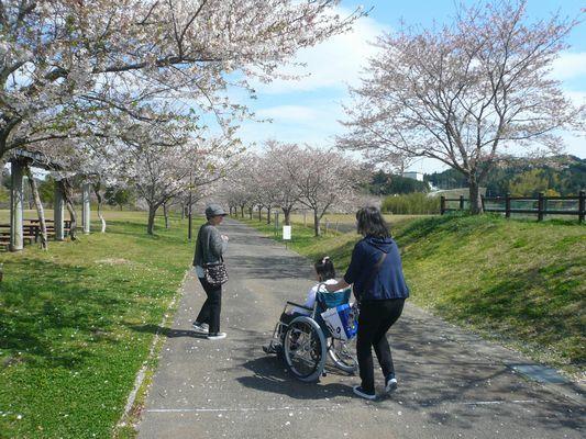 4/12 天啓公園_a0154110_08493814.jpg