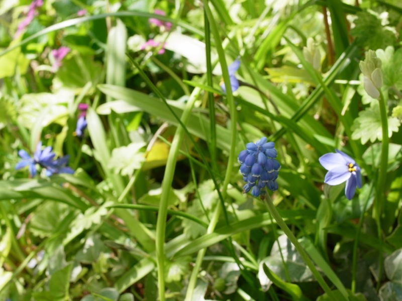 春の花色々_e0276411_23004288.jpg