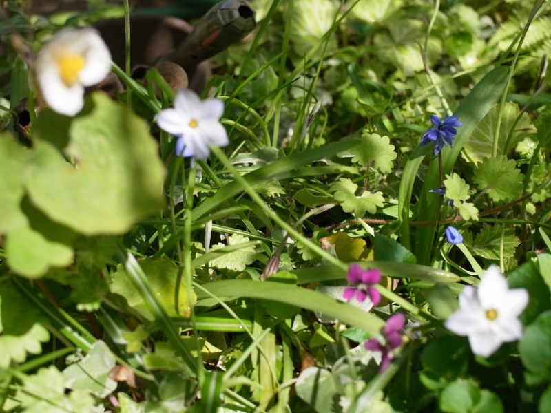 春の花色々_e0276411_23004680.jpg