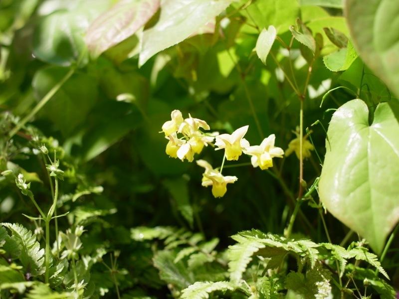 春の花色々_e0276411_23004940.jpg