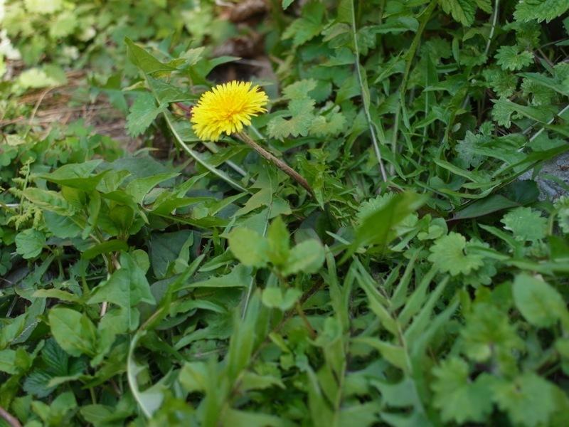 春の花色々_e0276411_23005251.jpg