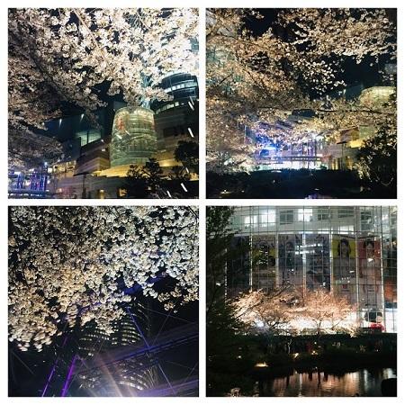六本木ヒルズの夜桜_b0114515_22405352.jpg
