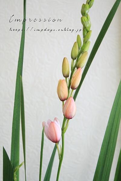 季節を楽しむ 花束レッスン_a0085317_01420222.jpg