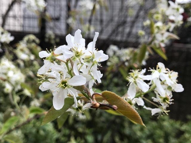 サロンの春♪春♪春♪_d0085018_13045128.jpg