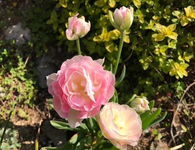 サロンの春♪春♪春♪_d0085018_13050147.jpg