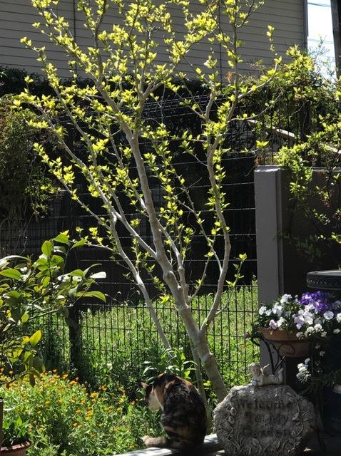 サロンの春♪春♪春♪_d0085018_13355344.jpg