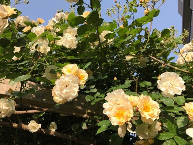 アユーラローズ*薔薇の花のお茶会*_d0085018_14231063.jpg