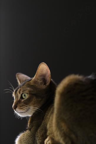 [猫的]ブラックシリーズ_e0090124_23210613.jpg