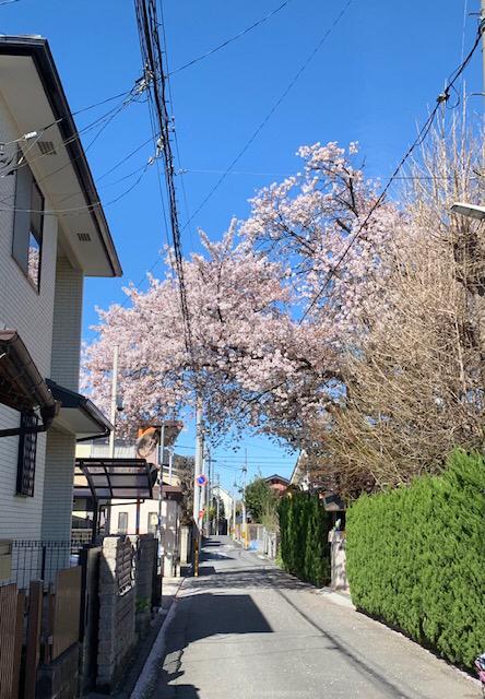 大和田幼稚園の入園式_e0412431_17473069.jpg