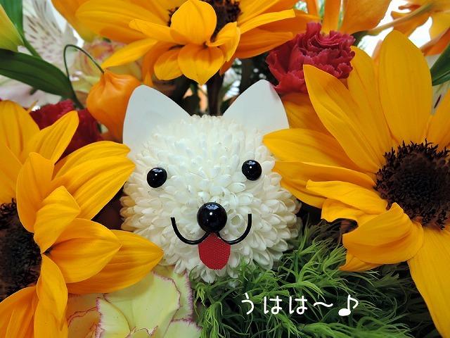 うれしいお花_c0062832_16110442.jpg