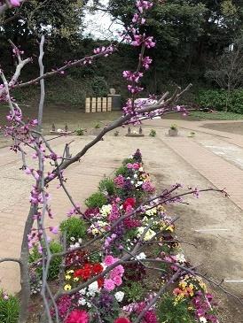 霊園の春_b0308135_11091795.jpg