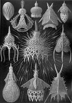 放散虫はすごい!〜プランクトンから地球の歴史を学ぶ〜_b0186442_08200355.jpg