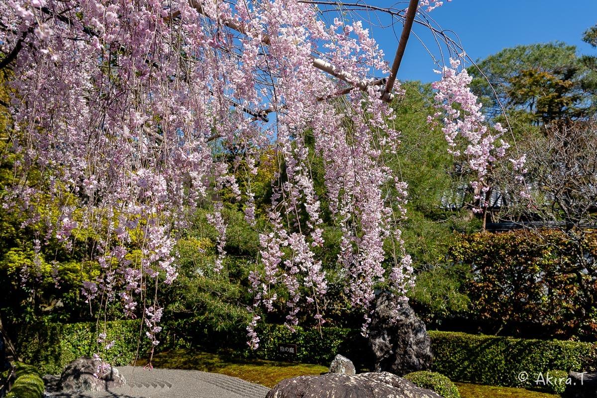 京都の桜 2019 〜5〜_f0152550_22190382.jpg