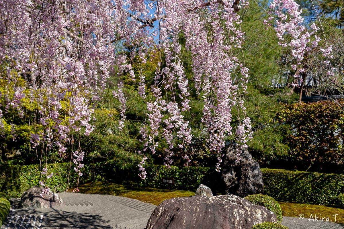 京都の桜 2019 〜5〜_f0152550_22190930.jpg