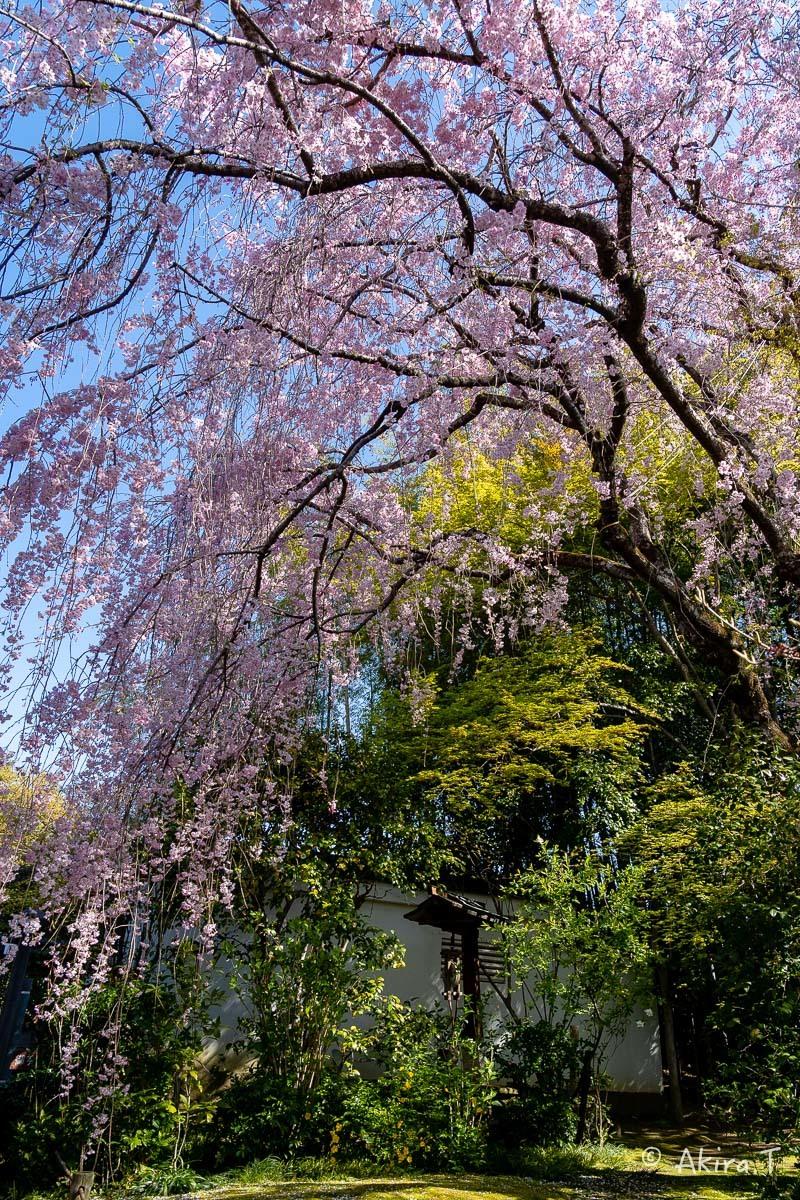 京都の桜 2019 〜5〜_f0152550_22193896.jpg