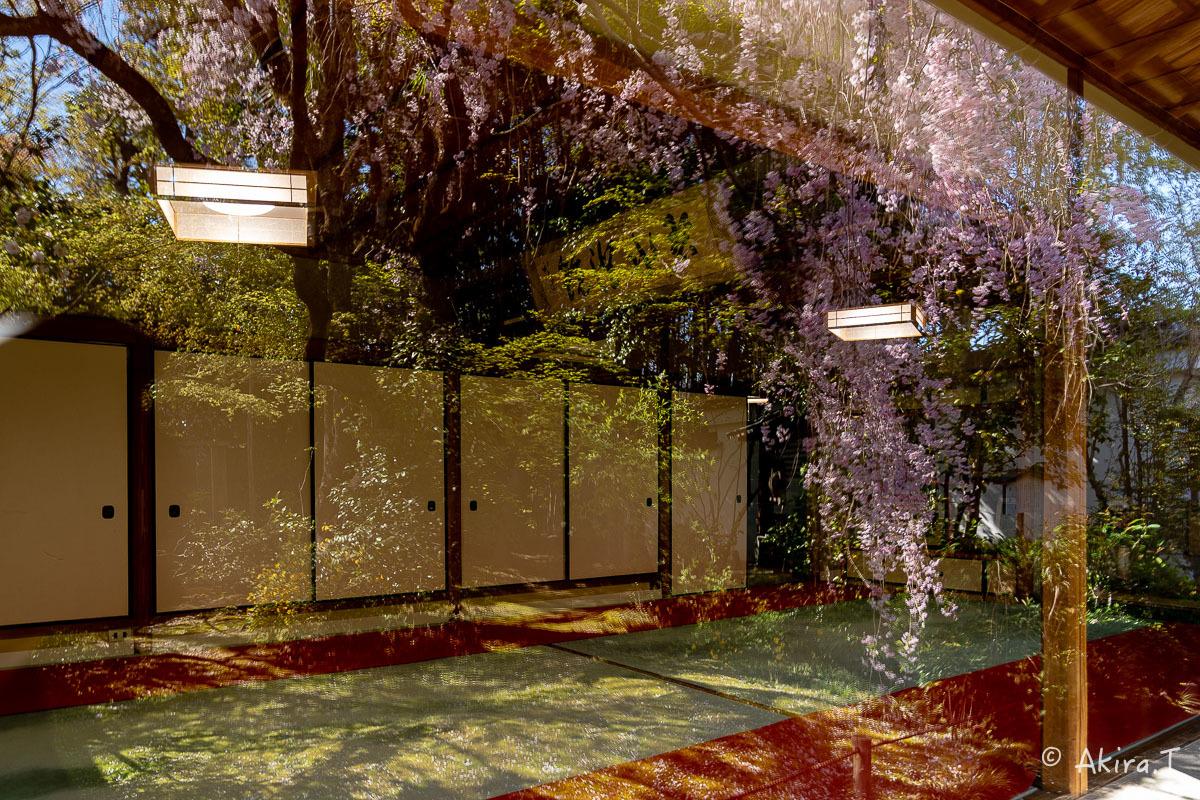 京都の桜 2019 〜5〜_f0152550_22194673.jpg