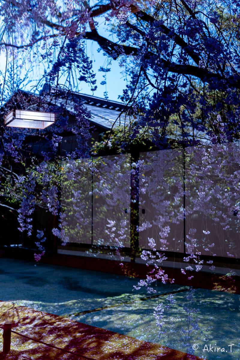 京都の桜 2019 〜5〜_f0152550_22200402.jpg