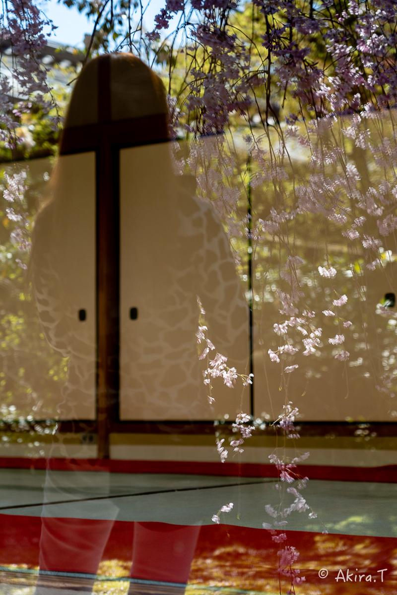 京都の桜 2019 〜5〜_f0152550_22212342.jpg