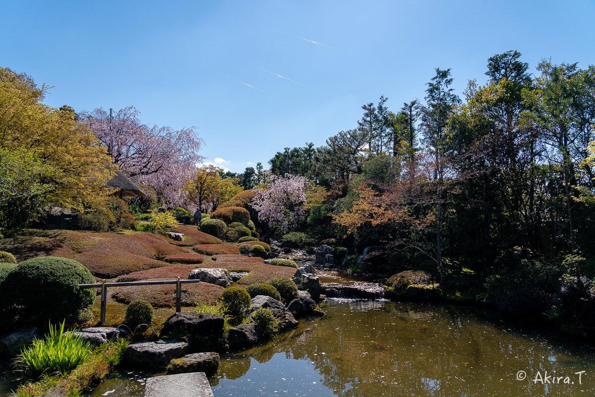 京都の桜 2019 〜5〜_f0152550_22214022.jpg