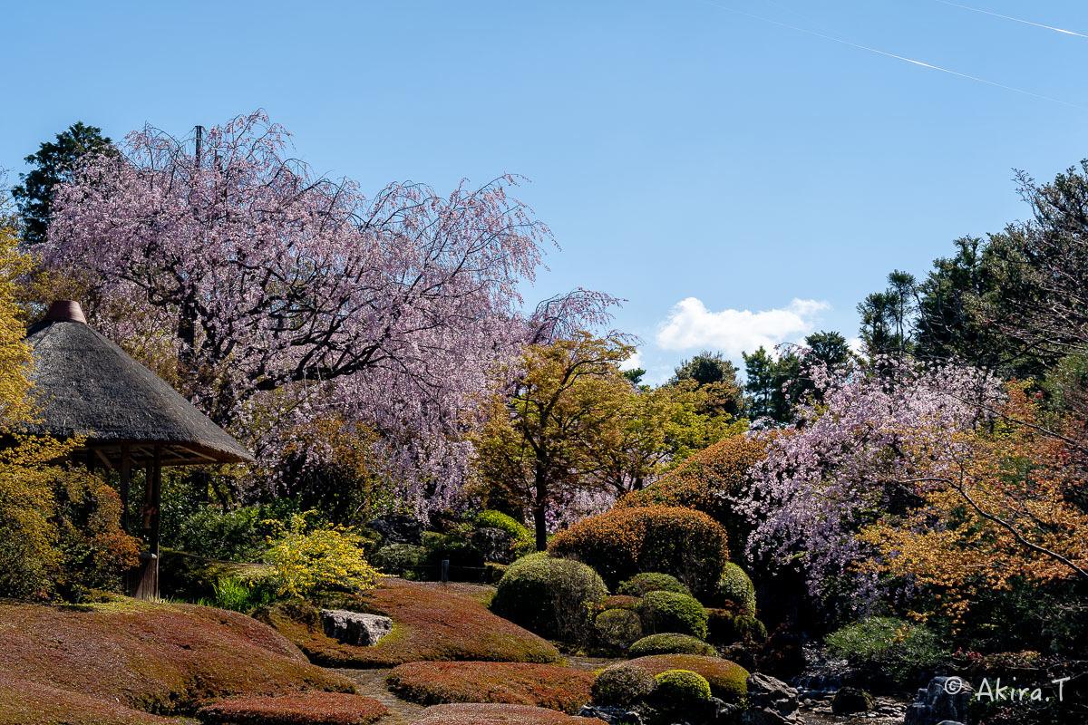 京都の桜 2019 〜5〜_f0152550_22221197.jpg