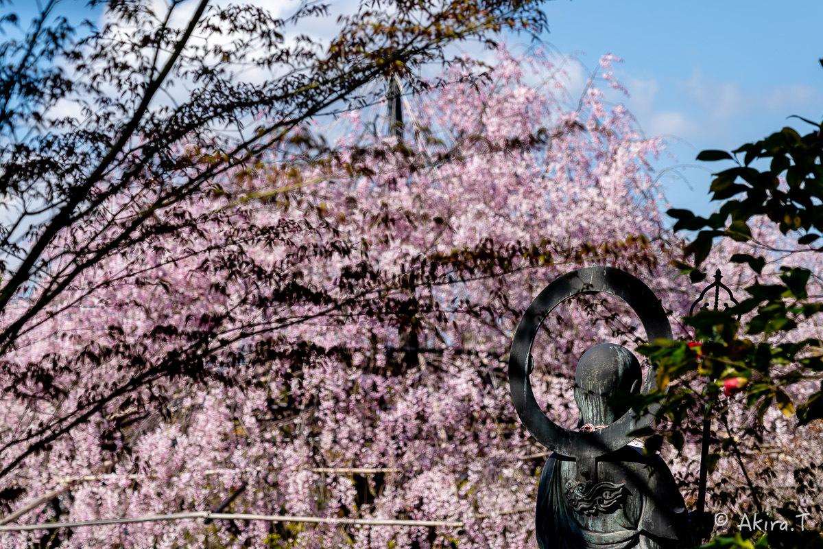 京都の桜 2019 〜5〜_f0152550_22224381.jpg