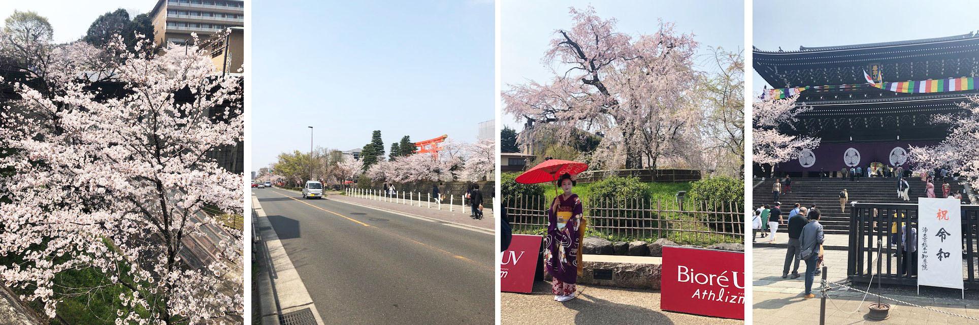 花冷えつづき、お花見が長く楽しめた今年の桜。〔左京区・東山区…桜コレクション〕_b0215856_17063831.jpg
