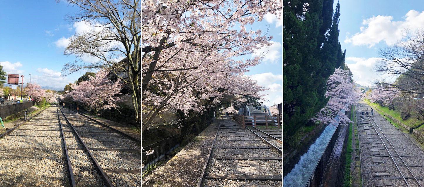 花冷えつづき、お花見が長く楽しめた今年の桜。〔左京区・東山区…桜コレクション〕_b0215856_17064364.jpg