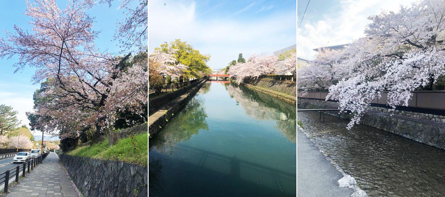 花冷えつづき、お花見が長く楽しめた今年の桜。〔左京区・東山区…桜コレクション〕_b0215856_17064681.jpg