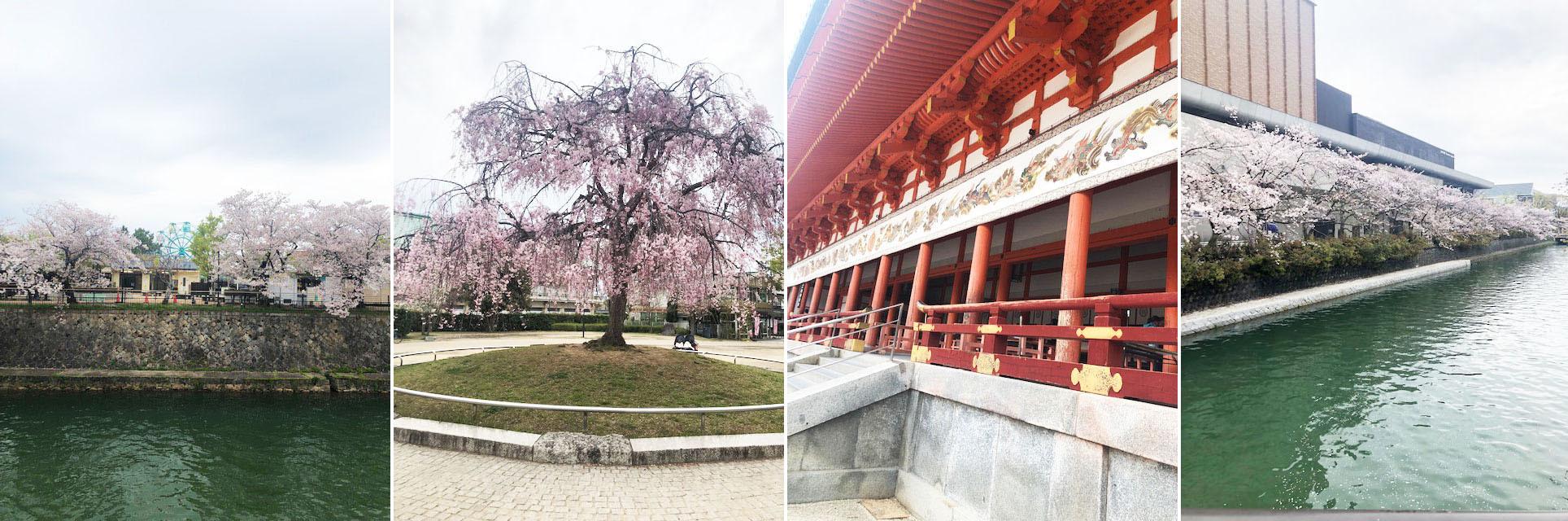 花冷えつづき、お花見が長く楽しめた今年の桜。〔左京区・東山区…桜コレクション〕_b0215856_17065308.jpg