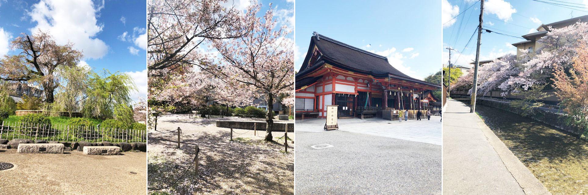 花冷えつづき、お花見が長く楽しめた今年の桜。〔左京区・東山区…桜コレクション〕_b0215856_17065810.jpg