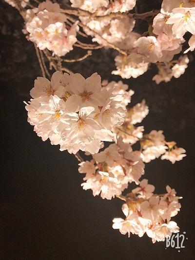 春ですね~・・・(*^^*)_b0347262_00212505.jpg