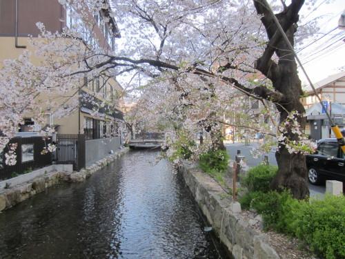 桜散らしの雨_f0256164_11075699.jpg