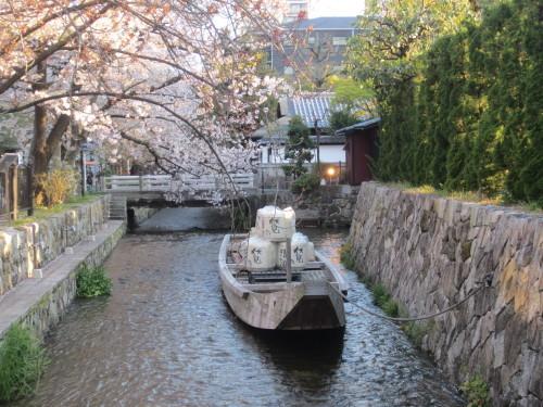 桜散らしの雨_f0256164_11083523.jpg