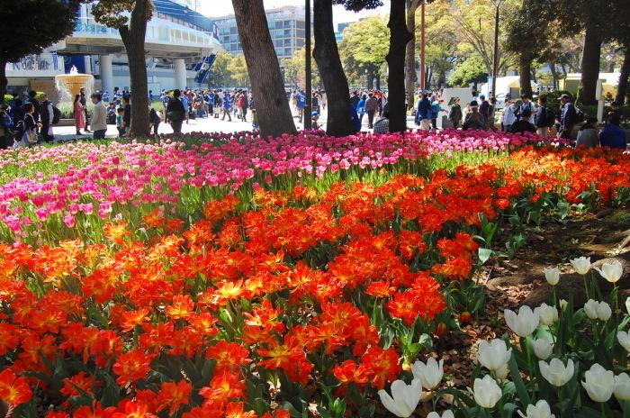 in横浜② 横浜公園_d0172270_14451479.jpg