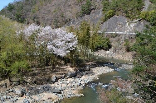 山の吊橋まで_b0102572_12590250.jpg