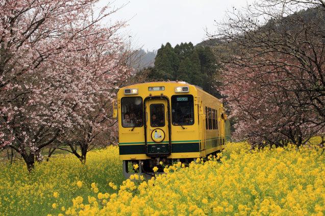 いすみ市で筍と桜と温泉_a0077673_23061048.jpg