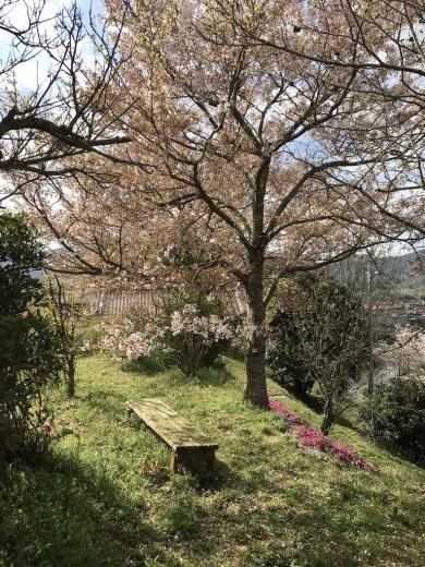散りゆく桜と芽吹く若葉_c0334574_19363419.jpg