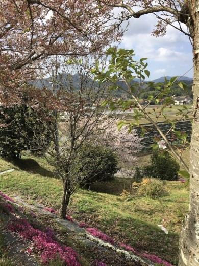 散りゆく桜と芽吹く若葉_c0334574_19363760.jpg