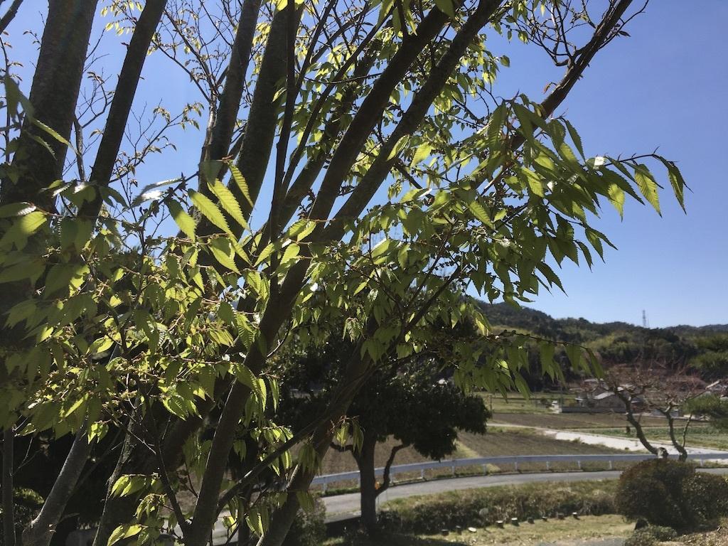 散りゆく桜と芽吹く若葉_c0334574_19395756.jpg