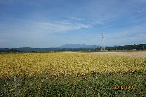 稲刈り体験(緑ヶ丘小・北郷小) _d0247484_150218.jpg