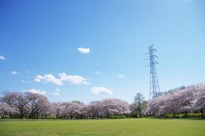桜物語 2019 春 その6 鴻沼川〜さくら草公園_d0016587_17585638.jpg