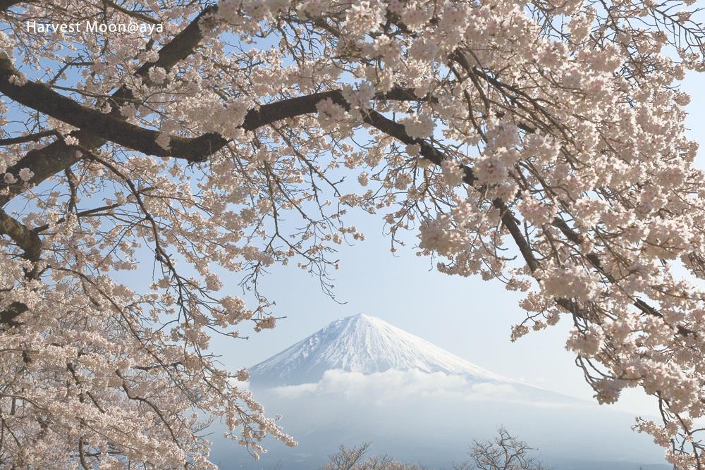 桜フレーム_b0208495_00530594.jpg