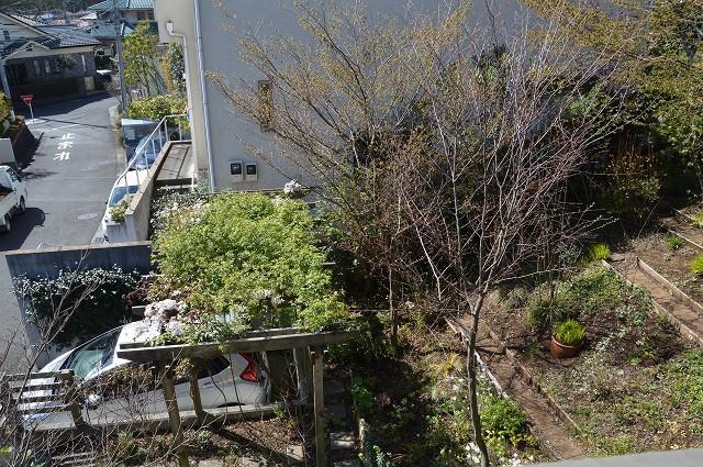 宿根草の芽吹き! 4月9日の庭。後編_c0124100_21400065.jpg