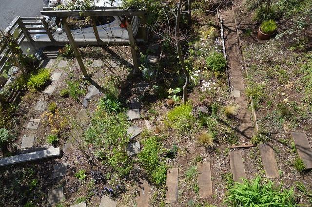 宿根草の芽吹き! 4月9日の庭。後編_c0124100_21400755.jpg